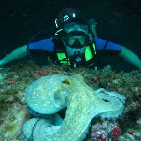 Polpo durante immersione a Cala Mariolu